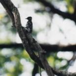 cropped-1-bird.jpg
